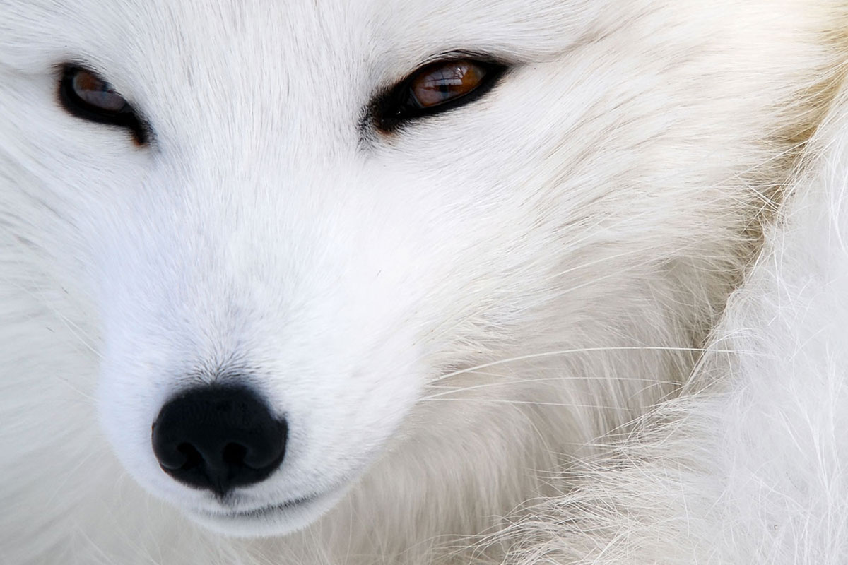 WHITE FOX FASHION